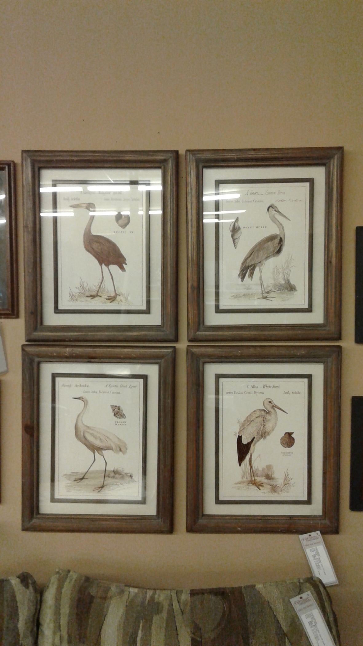 Uttermost Framed Bird Pictures Delmarva Furniture